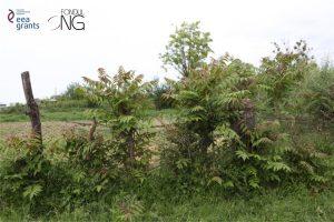 codul voluntar de conduită arbori invazivi