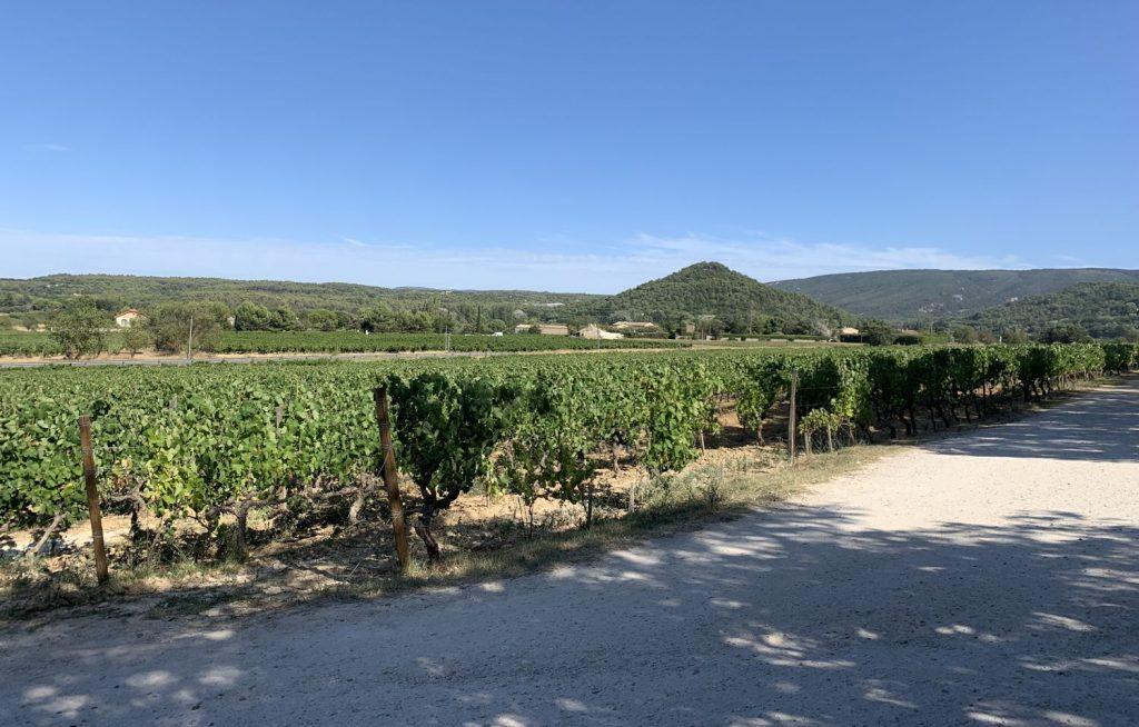 Vin de Provence 1